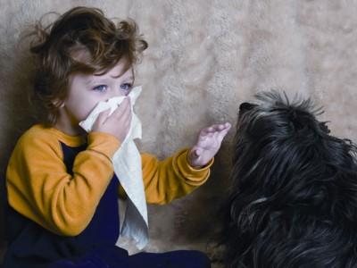 Собаки, не вызывающие аллергию