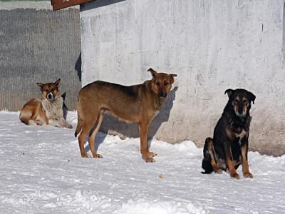 Прокуратора защитила бездомных псов