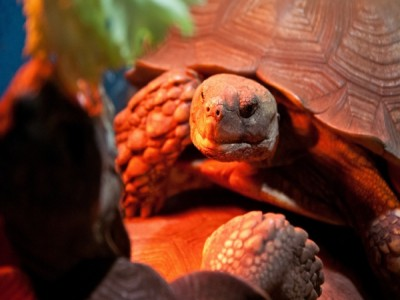 Черепаха-мутант в Киеве