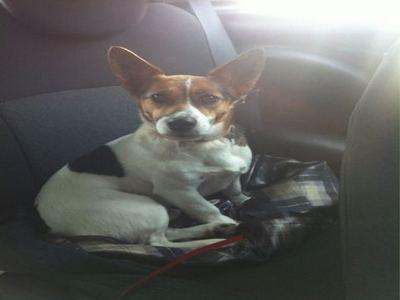 Пользователи Twitter помогли потерявшейся собаке вернуться домой