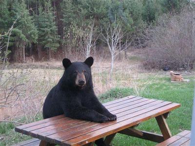 Медведь пришел в гости к американским школьникам