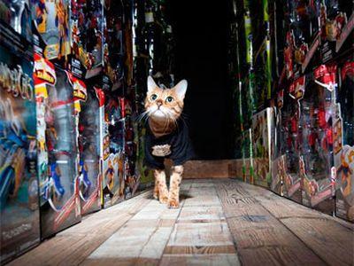 В Великобритании кошка работает охранником на складе игрушек