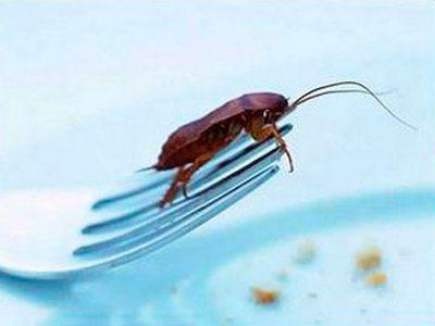 Тараканы поразили ученых своими акробатическими талантами