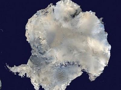 В древней Антарктиде существовал растительный мир